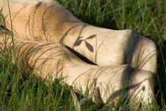 Fohlen-Füße im Gras Stockfotos