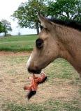 Fohlen-tragendes Spielzeug-Pferd Stockfotografie