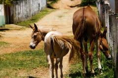 Fohlen und Pferd Stockfotos