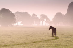 Fohlenschattenbild auf Weide im Nebel Stockfoto