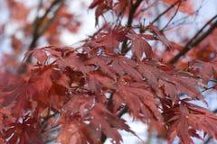 Foilage à l'automne Photo libre de droits