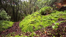 Foilage boulders and tree roots. Video of foilage boulders and tree roots stock video footage