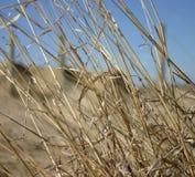 Foin Photos libres de droits