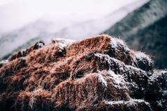 foin et neige photographie stock libre de droits
