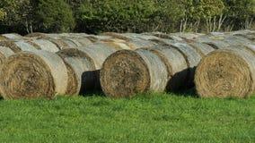 Foin moissonné au bord du champ à la ferme photos stock