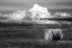 Foin - noir et blanc images libres de droits