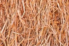 Foin ou paille Photo libre de droits