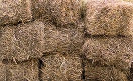 Foin sec de fond naturel empilé dans un mur d'alimentation de bétail de bloc Photo libre de droits