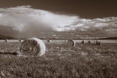Foin sur la prairie. Photos libres de droits