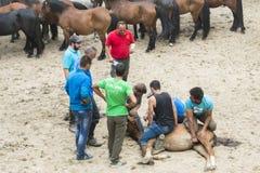 Foire de cheval photos stock