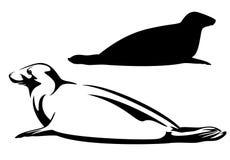 foka ilustracja wektor