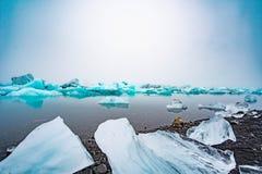 Foka chłodzi z spławowym lodem Obraz Stock