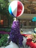 Foka przy Bellagio kasynem i kurortem Fotografia Royalty Free
