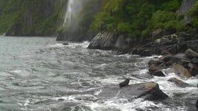 Foka siedząca na skale