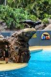 Foki i dennego lwa przedstawienie przy Loro parkiem, Puerto De La Cruz, Tener zdjęcia stock