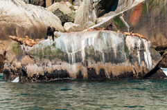 Foki kolonia Fotografia Royalty Free