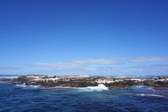 Foki kolonia przy foki wyspą, przylądka miasteczko, Południowy Affica Zdjęcia Stock