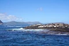 Foki kolonia przy foki wyspą, przylądka miasteczko, Południowy Affica Obraz Royalty Free