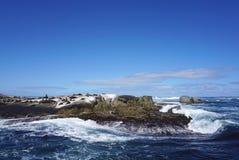 Foki kolonia przy foki wyspą, przylądka miasteczko, Południowy Affica Zdjęcie Royalty Free