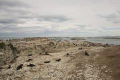 Foki na plażowym Nowa Zelandia Zdjęcia Royalty Free
