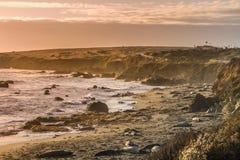 Foki plaża Zdjęcia Royalty Free