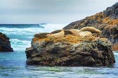 Foki przy foki skały plażą Obrazy Royalty Free