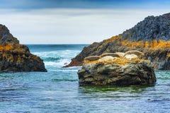 Foki przy foki skały plażą Zdjęcie Royalty Free