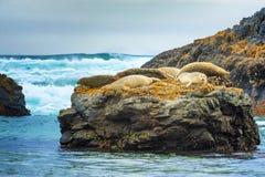 Foki przy foki skały plażą Fotografia Royalty Free