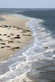 Foki siedzą między holenderskimi wyspami Terschelling i Ameland Obrazy Stock