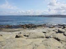 Foki w zatoczce Fotografia Royalty Free