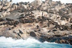 Foki wyspa w Fałszywej zatoce, Południowa Afryka Obraz Stock