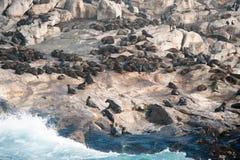 Foki wyspa w Fałszywej zatoce, Południowa Afryka Obrazy Stock