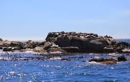 Foki wyspa w Kapsztad Obraz Stock