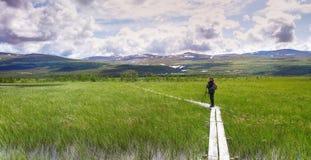 Fokstumyra nature reserve. Birdwatcher on Summer day at Fokstumyra nature reserve, Dovrefjell, Dovre kommune, Oppland fylke, Norway Stock Photo