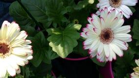 Fokus auf der ersten Blume Lizenzfreie Stockfotos