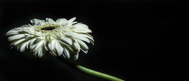 Fokus auf der ersten Blume Stockbild