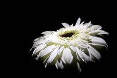 Fokus auf der ersten Blume Stockfotografie