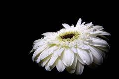 Fokus auf der ersten Blume Lizenzfreies Stockfoto