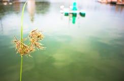 Fokus auf Grassümpfen Stockfotografie