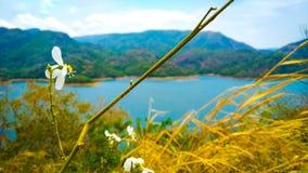 Fokus auf schönem Gebirgszug einiger Blumen mit See lizenzfreies stockfoto