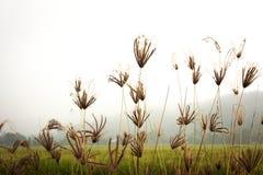 Fokus av någon blomma av gräs Arkivfoton