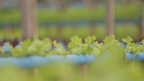 Fokus, der in einem Wasserkulturbauernhof ändert stock video footage