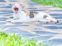 Fokus an der Katze liegt auf konkretem Boden und Gegähne Stockbilder