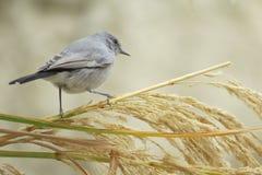 Fokus - pájaro imagen de archivo