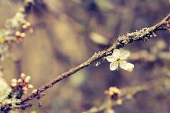 Fokus på den enkla blomman på trädfilial Royaltyfri Foto