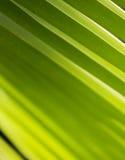 Fokus på den gröna palmbladet på Asien Royaltyfri Bild