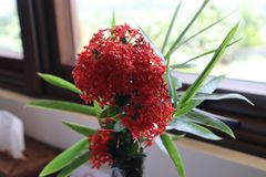 Fokus på den röda blomman fotografering för bildbyråer