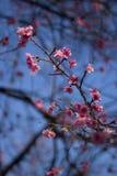 Fokus på den rosa rosen arkivfoto