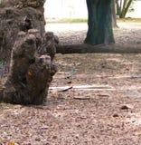 Fokus på ett träd Royaltyfria Bilder