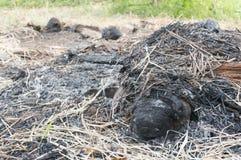 Fokusera askaen av kokosnöten som var på brand Fotografering för Bildbyråer